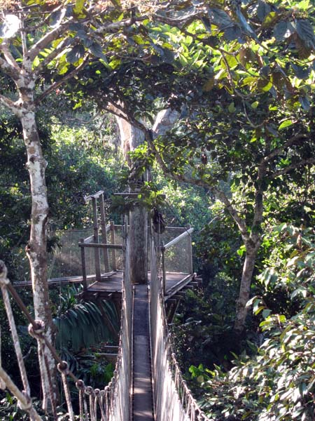 From this vantage point you can get close-up views of canopy dwellers that normally have you straining your neck. Paradise Green-and-gold ... & Birdernaturalist: The Canopy Walkway at Explornapo Lodge Peru