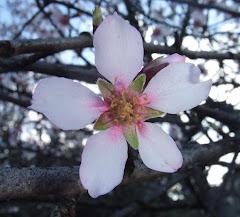 anunciando primavera