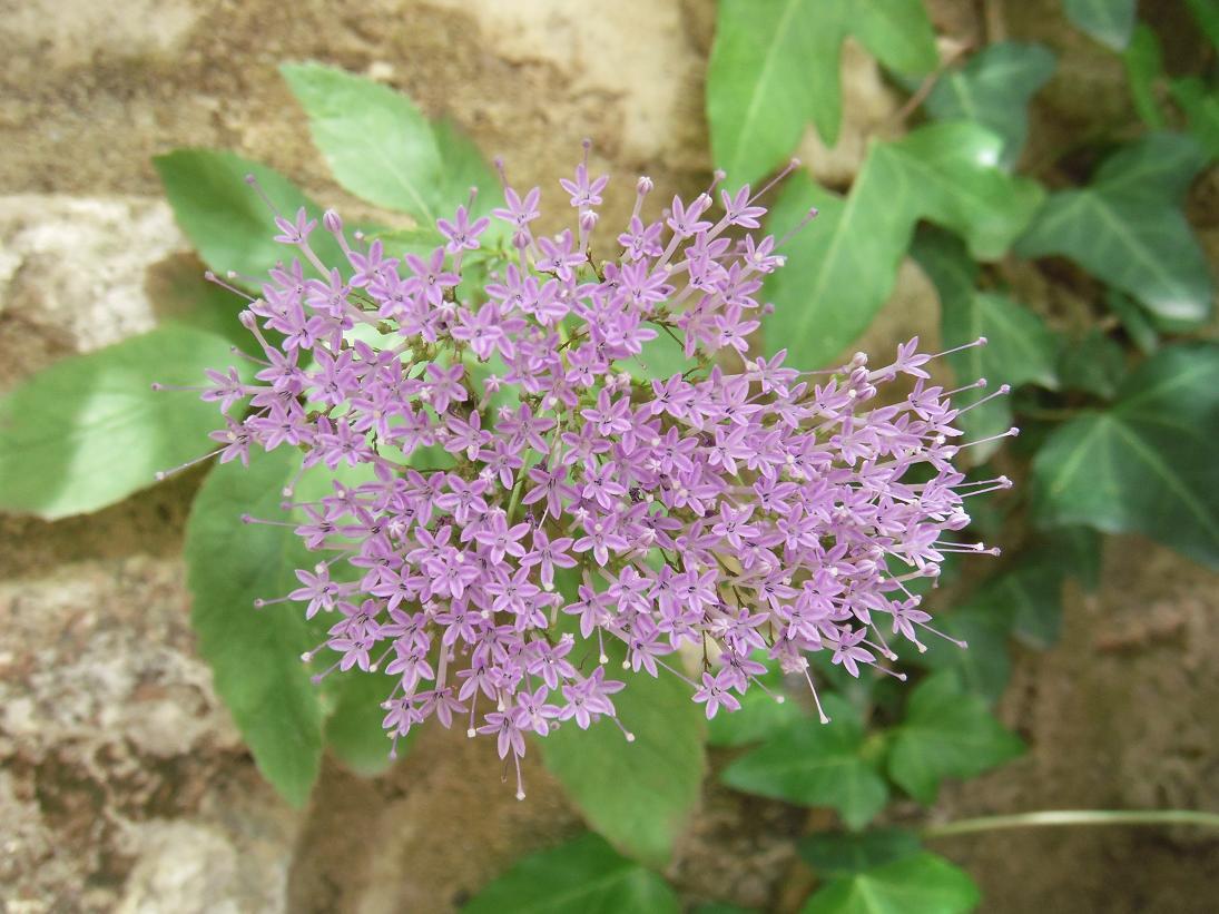 Excelente Uñas De Otoño De Color Púrpura Componente - Ideas Para ...