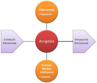 Esquema de función de la amígdala en la respuesta emocional