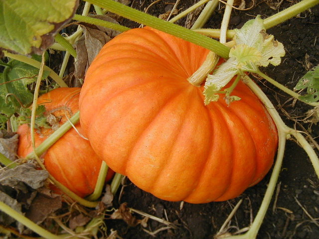 Photobucket | lighted pumpkin Pictures October Pumpkin Fest : Halloween Wallpaper