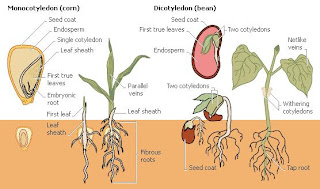 seed chart