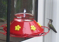 Hummingbirds return to Lake Norman