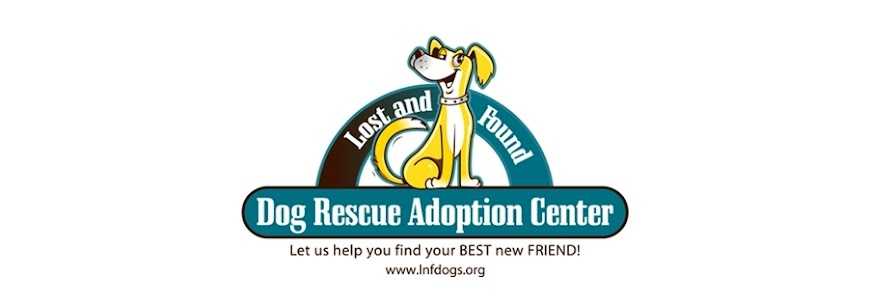 Lost and Found Dog Rescue Adoption Center