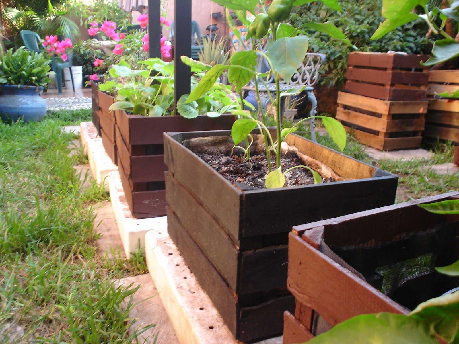Planeta verde contruye un huerto familiar a base de huacales - Huerto en casa macetas ...