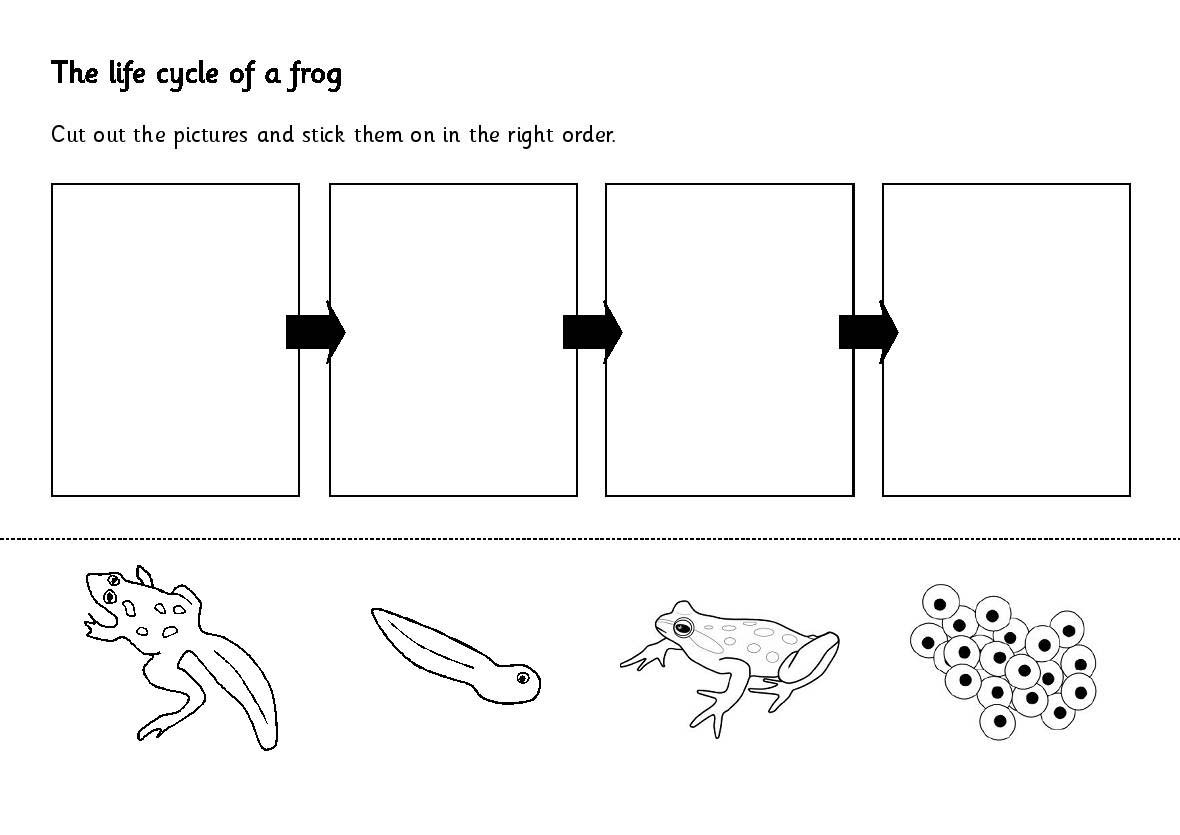 Modest image with life cycle of a frog printable