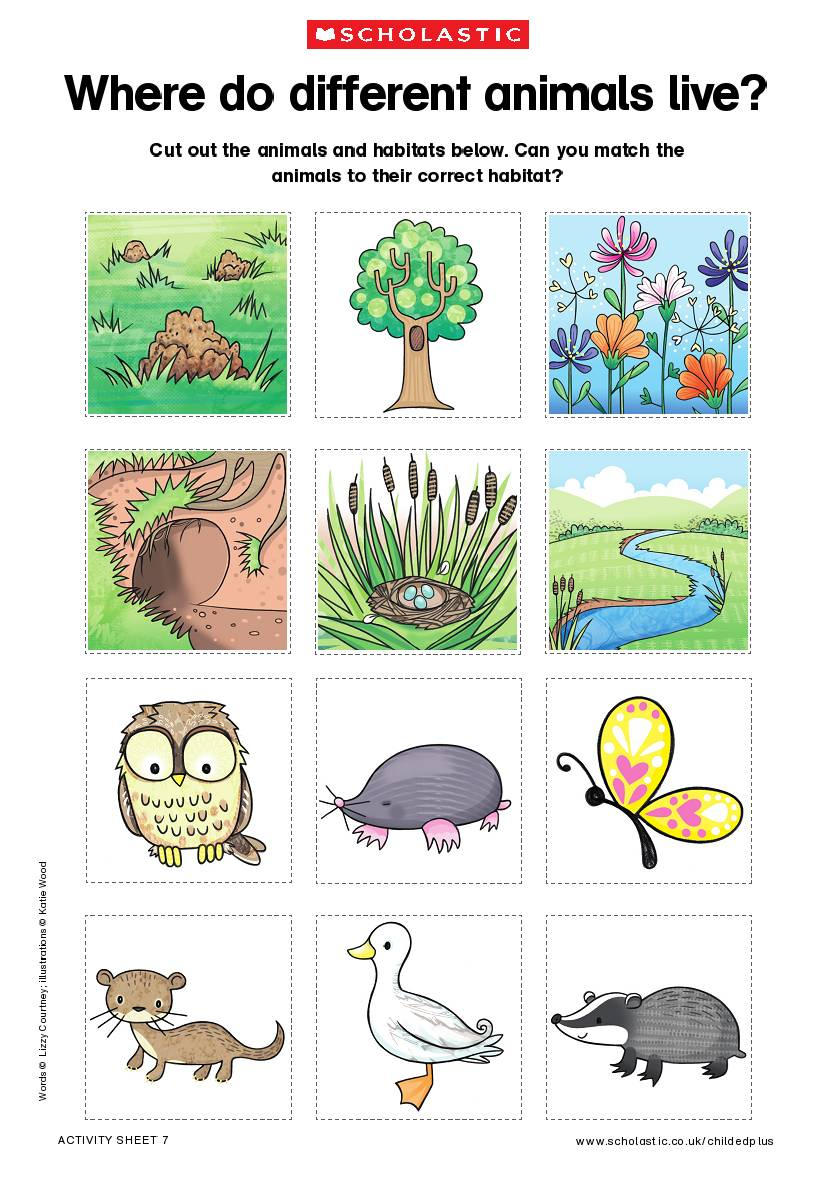 habitats of animals Animal - ecology and habitats: animals evolved in the seas but moved into fresh water and onto land in the ordovician period, after plants became available as a food source.