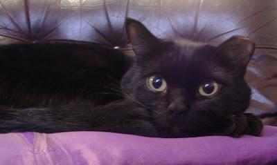 Easy Smokey Cat Eye Tutorial