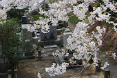 Blossoms in a Graveyard