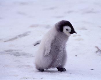 會飛的企鵝 -南極會飛的企鵝