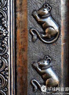 印度 老鼠廟 - 不可思議的 印度老鼠廟