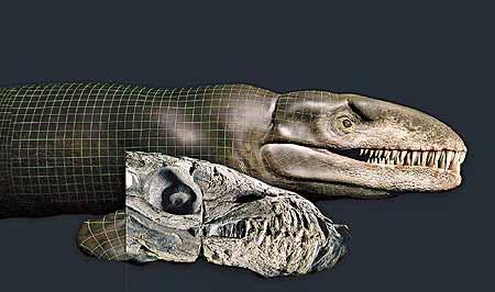 哥斯拉鱷魚 - 海怪 哥斯拉鱷魚