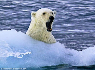 北極熊超好客 - 超級好客的北極熊