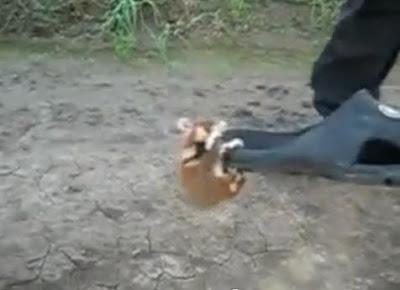 超兇猛功夫老鼠 - 超猛的俄羅斯功夫老鼠