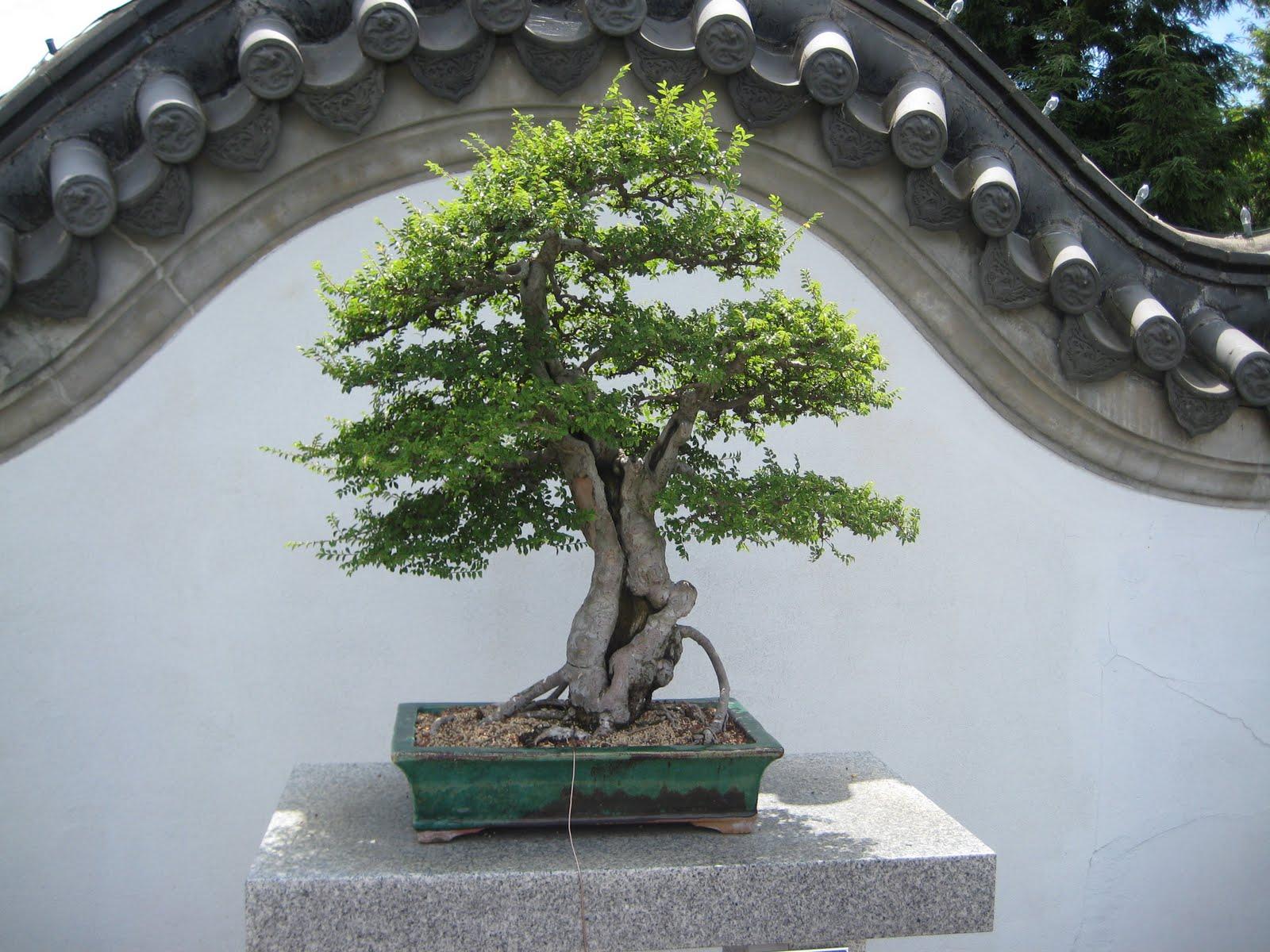 Aur lie le jardin chinois for Jardin chinois