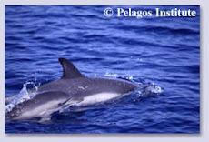 Ακούστε τα δελφίνια του Κορινθιακού
