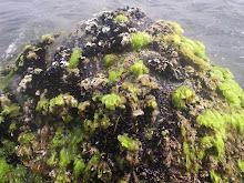 Algas, algunas