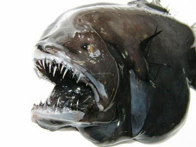 Ikan Aneh di Greenland