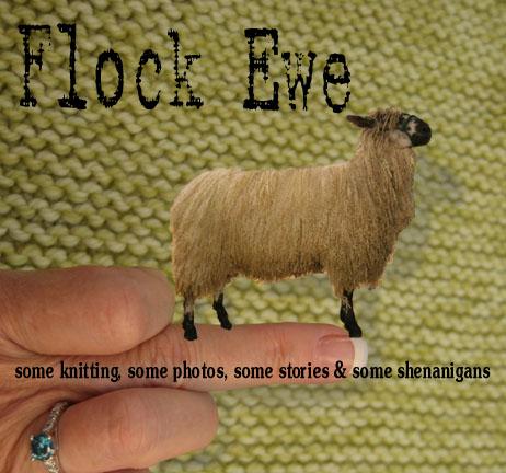 Flock Ewe
