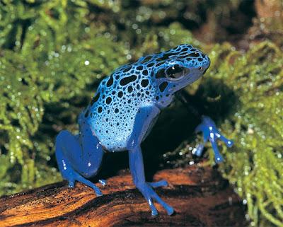 imagenes de animales exoticos del mundo - 10 Aves exóticas sorprendentes del mundo La Bioguía