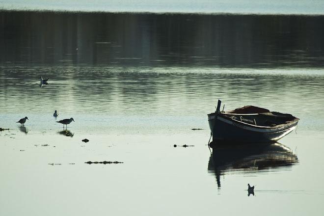 À lenta tranquilidade da baixa mar - Baía do Seixal