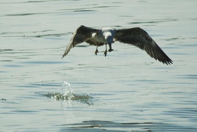 A arte da pesca - Baía do Seixal