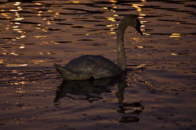 Vogando ao crepúsculo - Parque da Paz, Almada