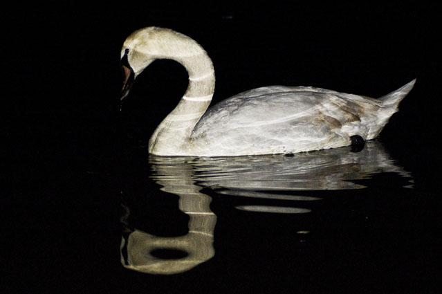 De branco navego na noite - Parque da Paz, Almada