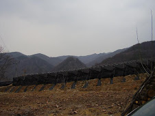 Mountains and Geumsan Ginseng