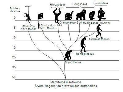 [filogenia+primatas]