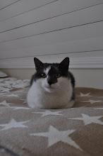 Katten Gösta bor hos oss..