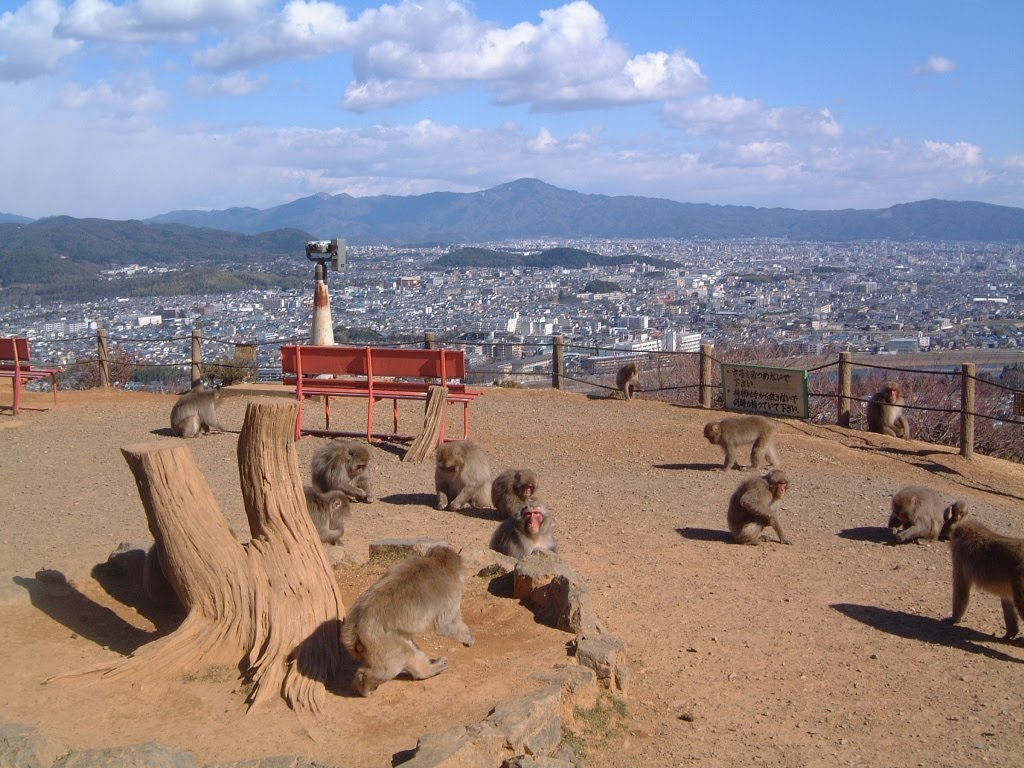 Kyoto Arashiyama Onsen Ryokan Togetsutei: ARASHIYAMA MONKEY PARK IWATAYAMA