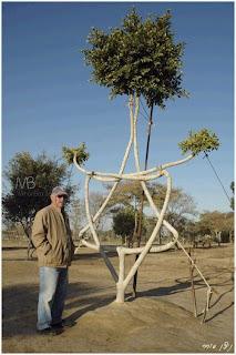 bia2pix.ir            درختهای جالب