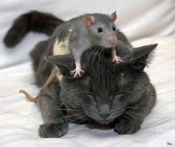 Mice and Rats - All Creatures Animal Exploitation Photo Gallery: This All