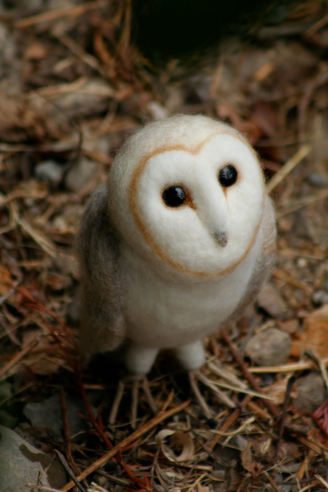 Baby barn owl images - photo#7