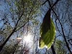 din verde al pădurii