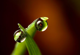 Îngemănarea lacrimilor cerului - poarta către suflet...