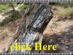 Απολιθωμένο Δάσος Λευκίμης Έβρου !!!