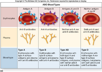 external image f21-7a_abo_blood_types_c.jpg