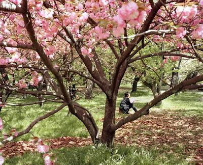 Art monie fleurs de cerisier for Hotel jardin de fleurs kyoto