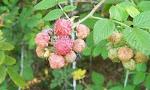 Frutas de A á Z  ( Clasificação Botânica) Clique na fruta e acesse o blog.