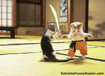 samurai cat, kucing samurai, funny cat, kucing lucu, kucing aneh, kucing langka