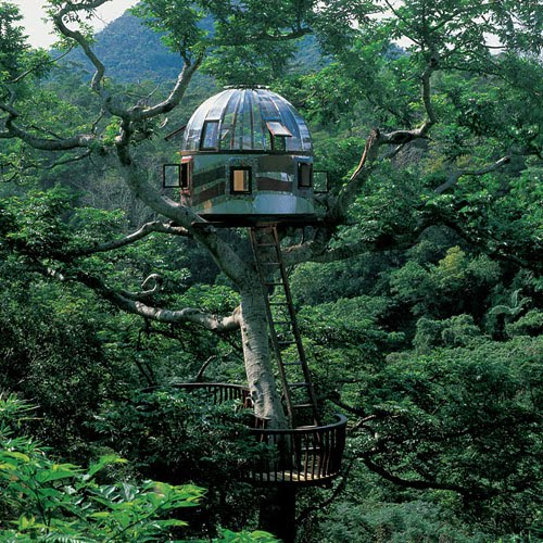 Tree houses negotiating the natural with the built for Houses built in trees