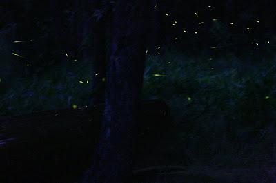 flickr fireflies