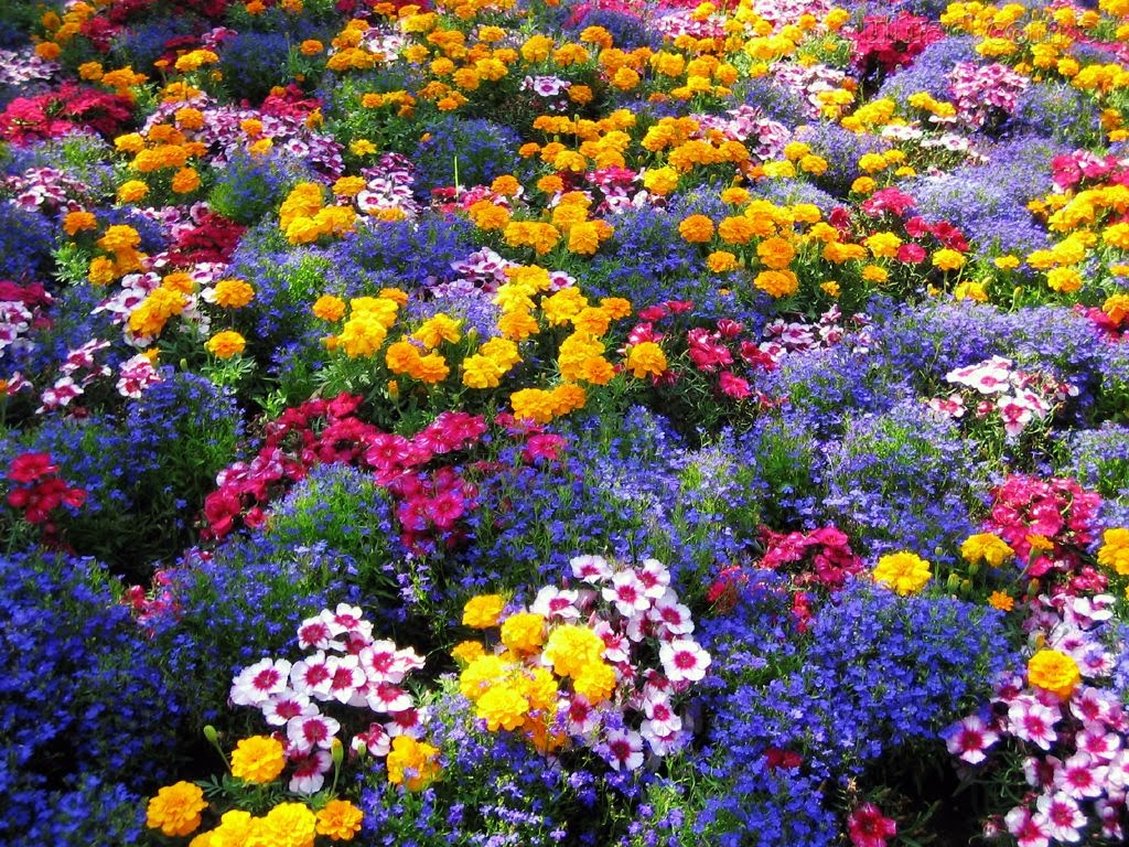 jardim rosas amarelas:Bing Free Screensavers Flower Gardens