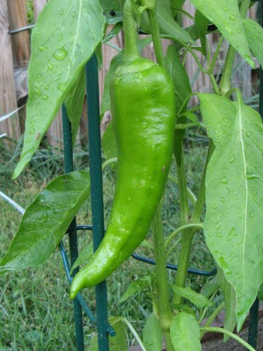 [pepper+time]