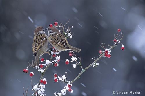 colorare la vita  foto d u0026 39 inverno