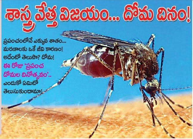 [Mosquito+day.jpg]