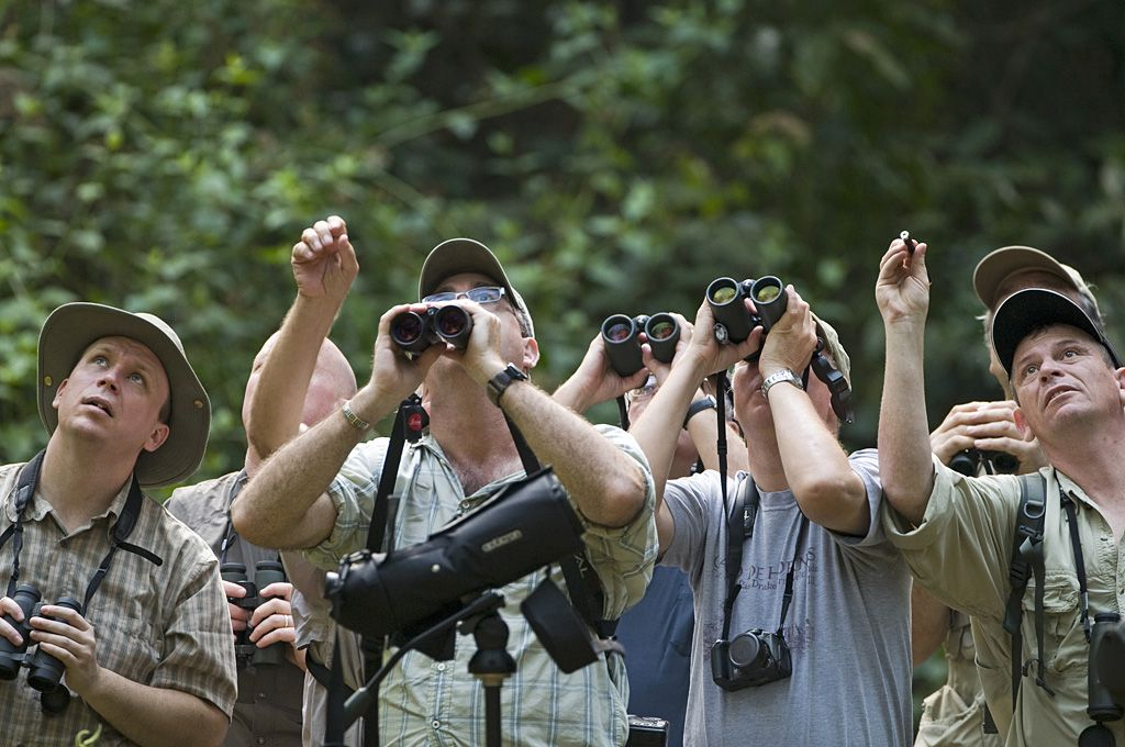 Birders need all kinds of gear for their activity  Photo    David