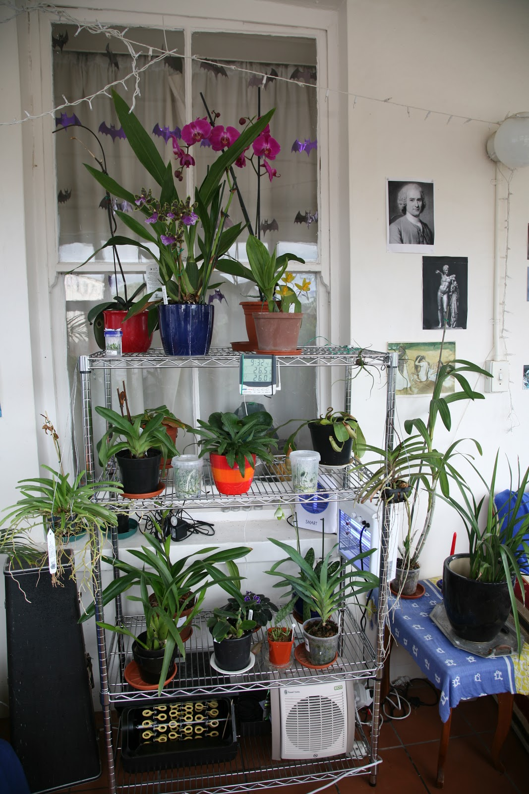 Orchids On A Balcony Re Shuffle Re Plant Re Decorate